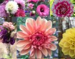 Bellaire Blooms